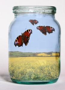 Butterfly Jar - Jamila Walker